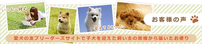 お客様の声 愛犬の友ブリーダーズサイトで子犬を迎えた飼い主の皆様から届いたお便り